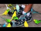 «Со стены Хвилясті папуги» под музыку Песня из м/ф    Рио - Рио - город мечты  . Picrolla